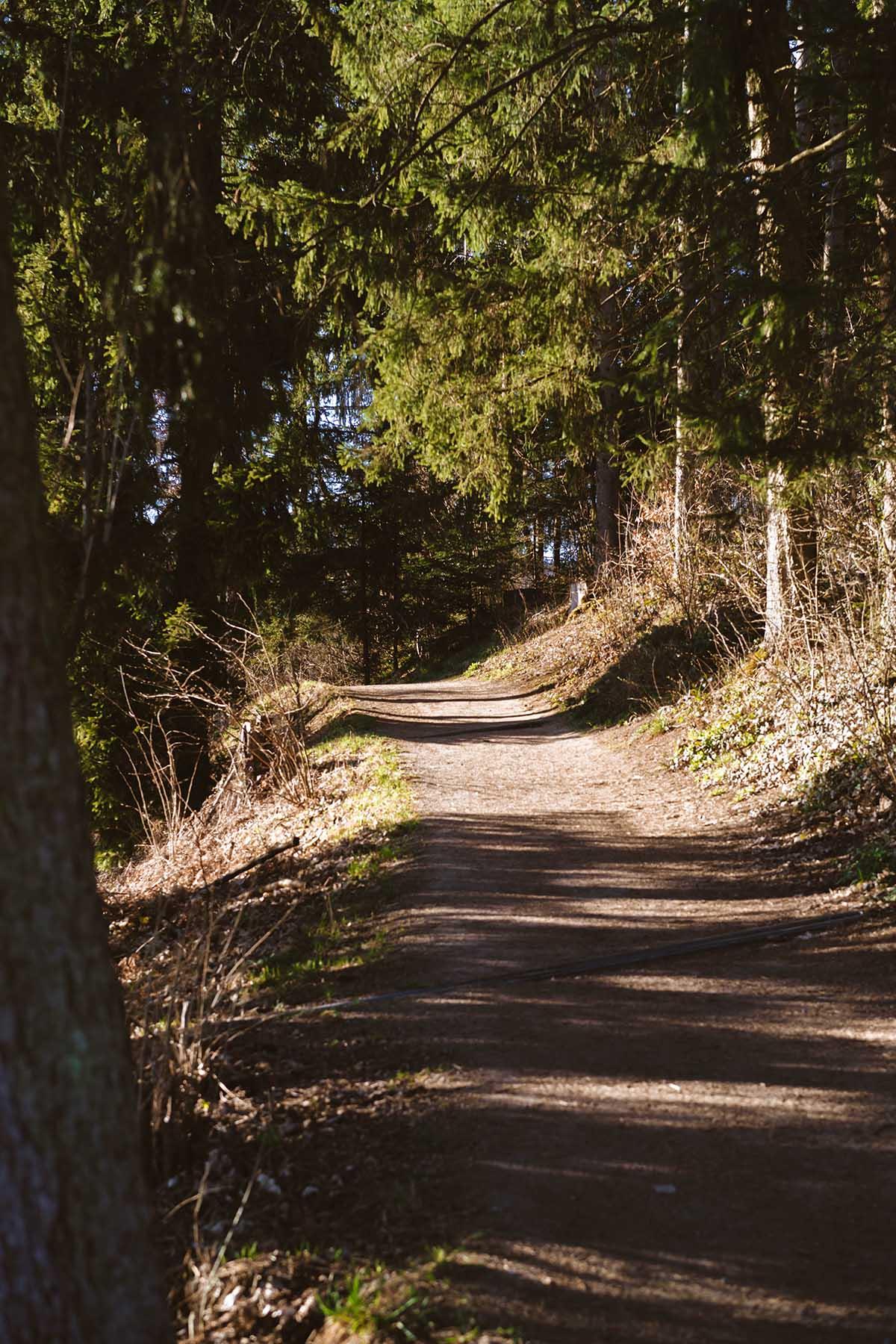 seen-bayerischerwald-freundensee-rundweg