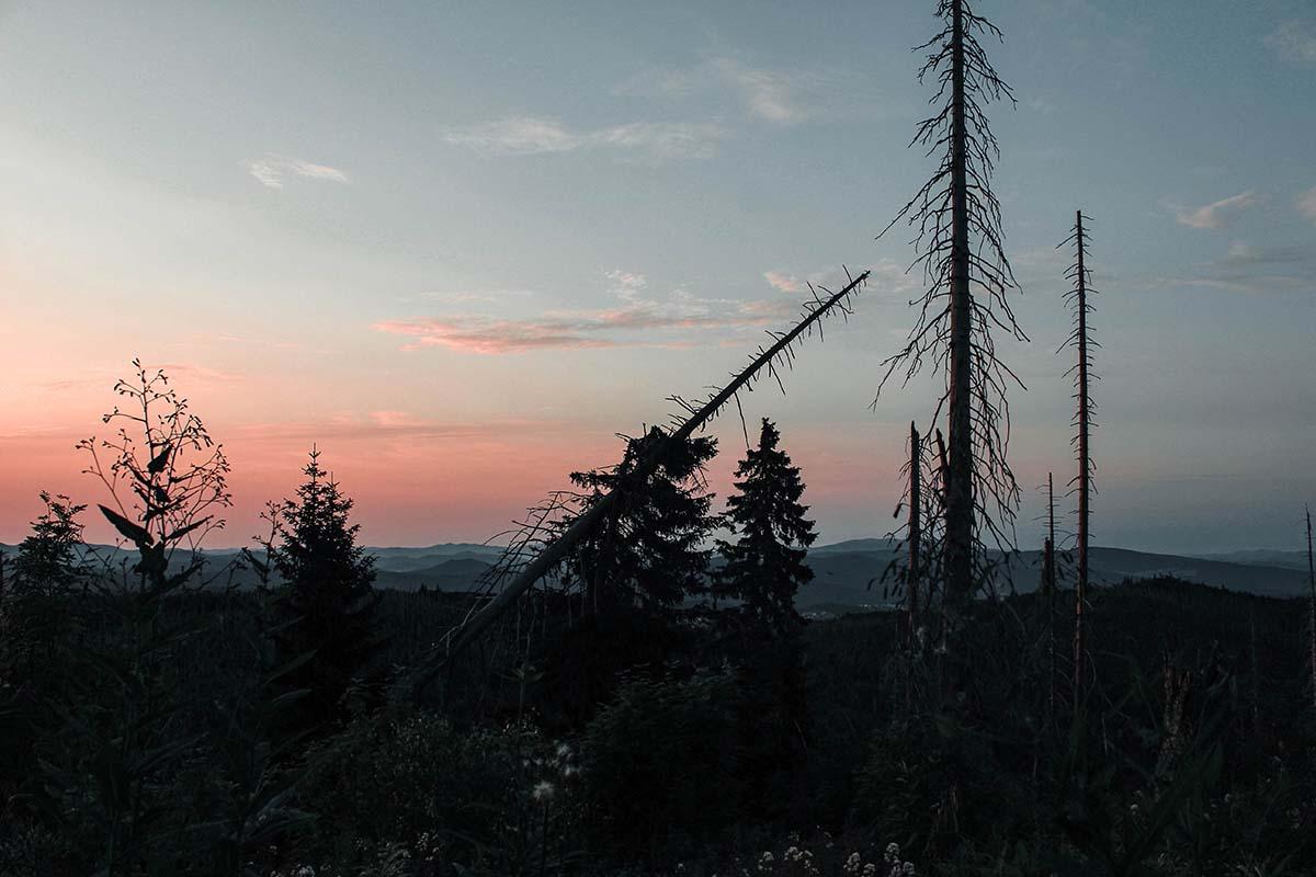 sonnenaufgang-lusen-wald-baeume-panorama-01