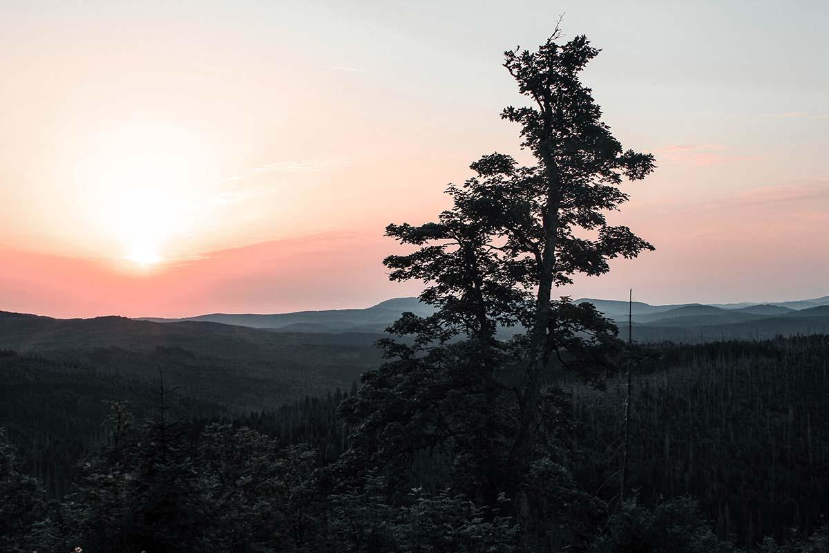 sonnenaufgang-lusen-wald-baeume-panorama-03