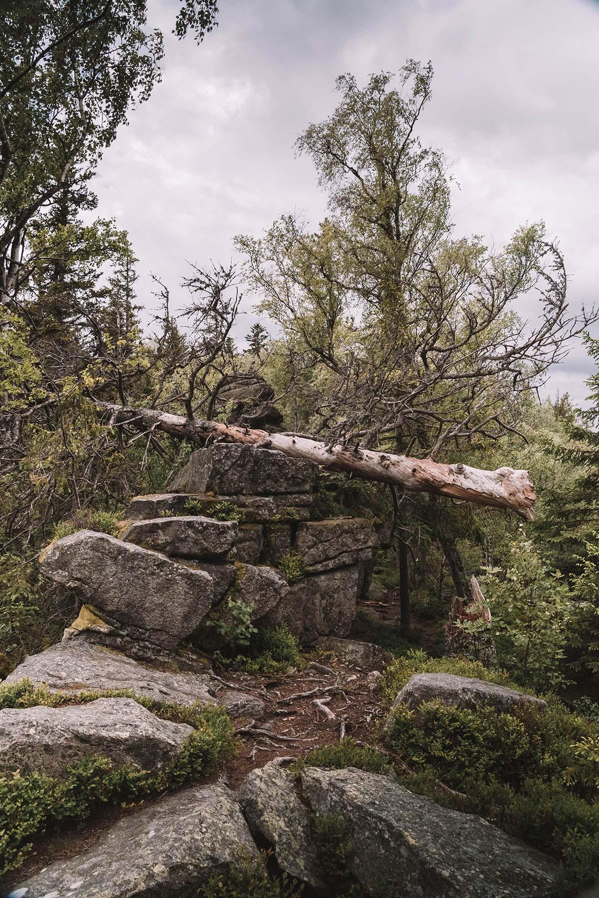 teufelstisch-bischofsmais-felsen-landschaft