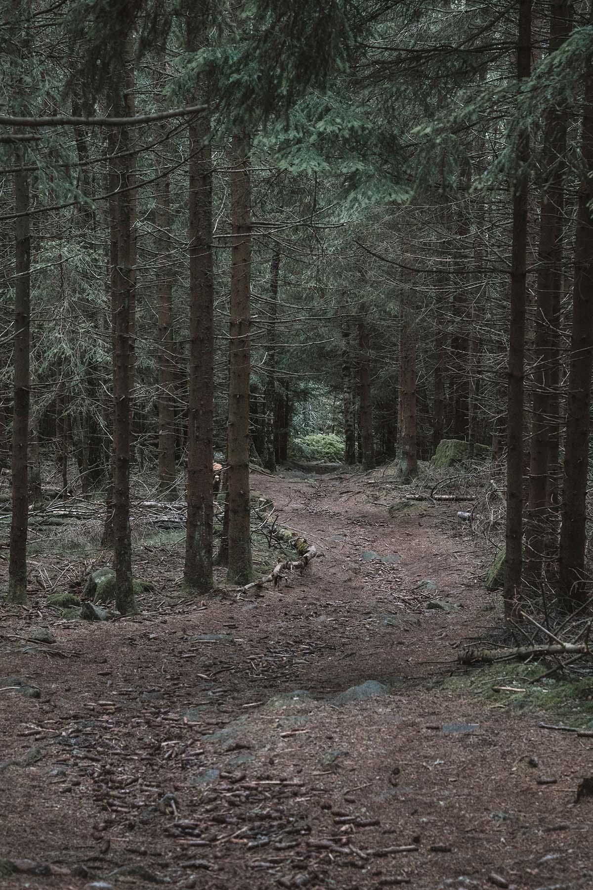 teufelstisch-bischofsmais-waldweg-lichtung