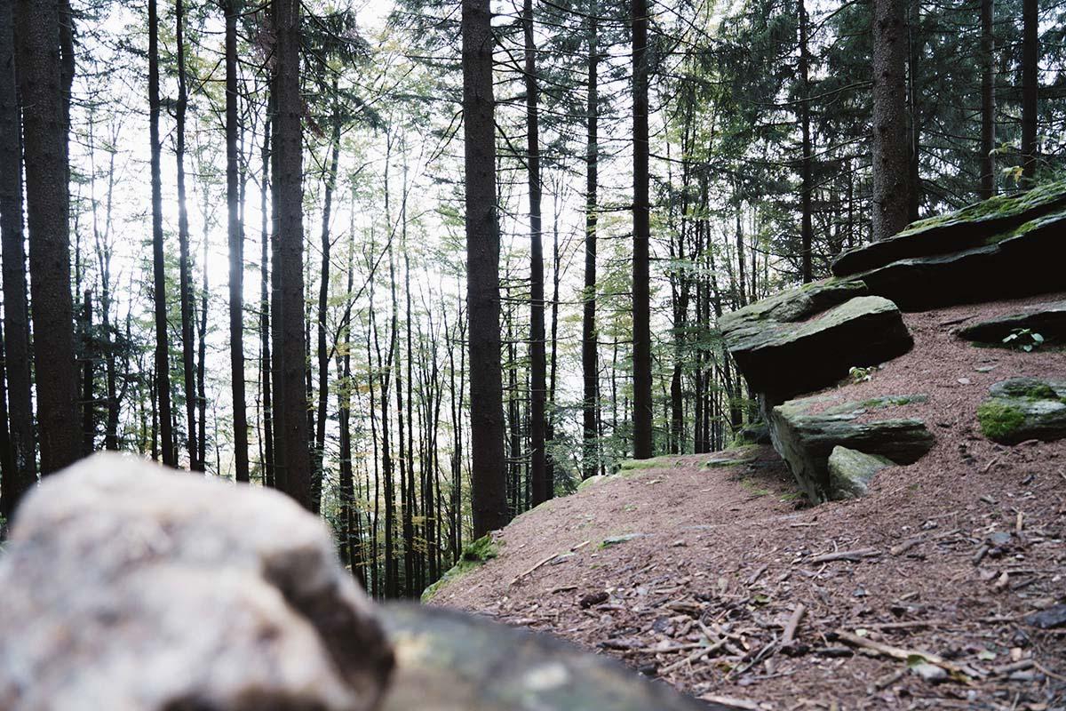 wellnesshotel-bayerwald-kaitersberg-wald-felsen-01