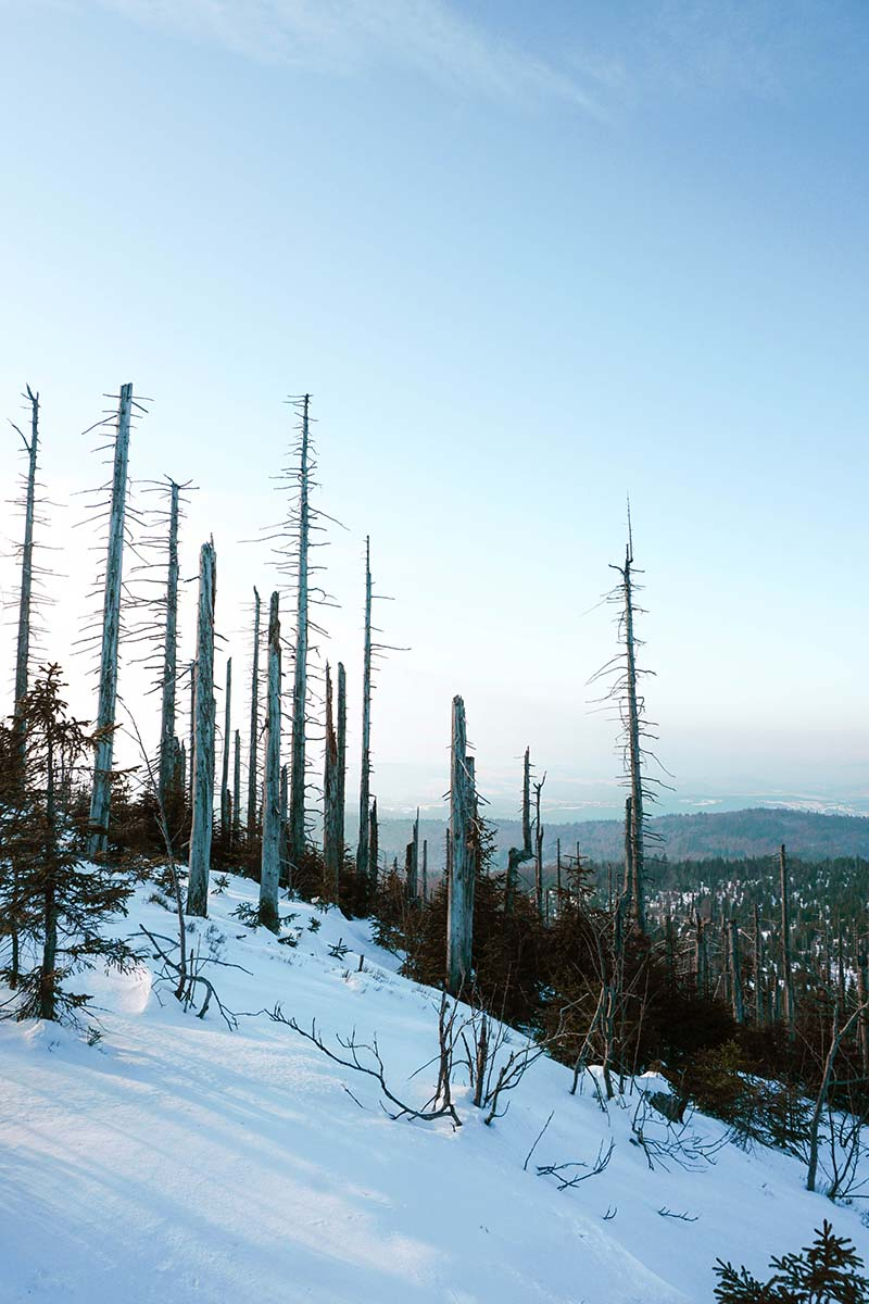winterwanderung-lusen-winter-baueme-11