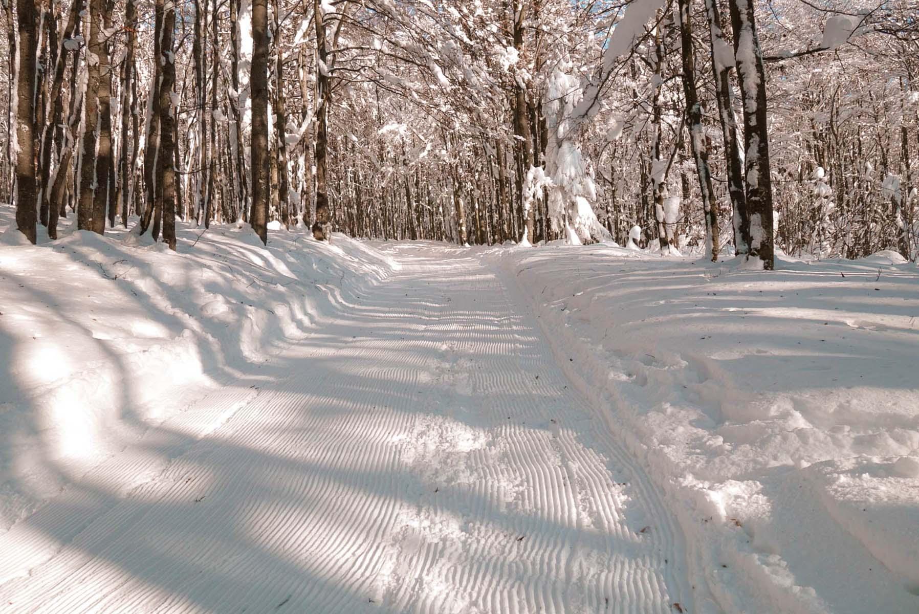 winterwanderung-lusen-winter-baueme-schnee-01