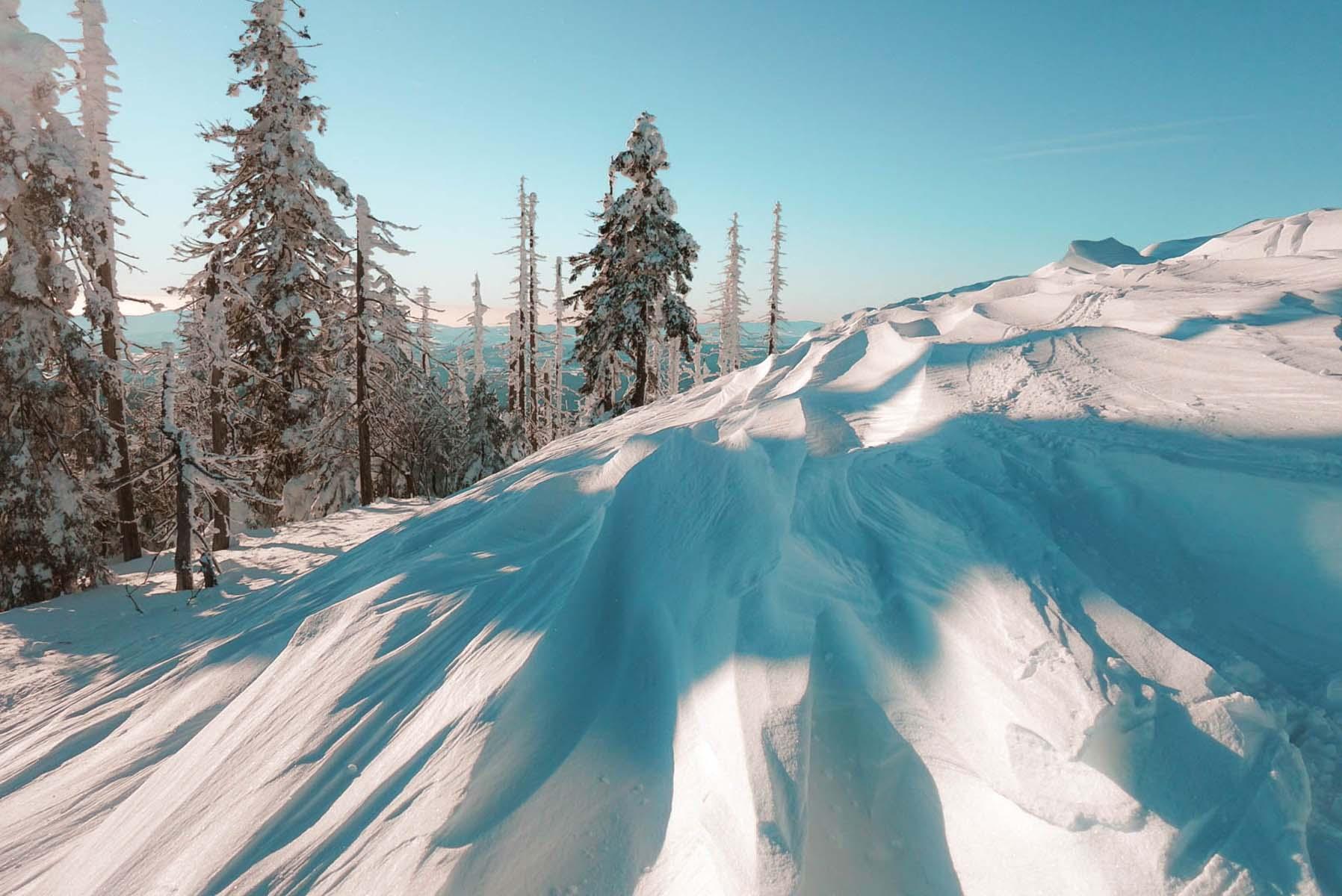 winterwanderung-lusen-winter-baueme-schnee-12