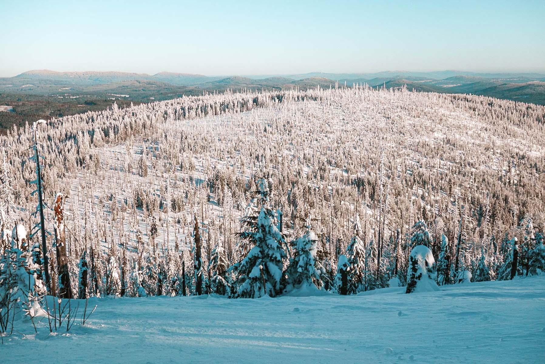 winterwanderung-lusen-winter-baume-schnee-07