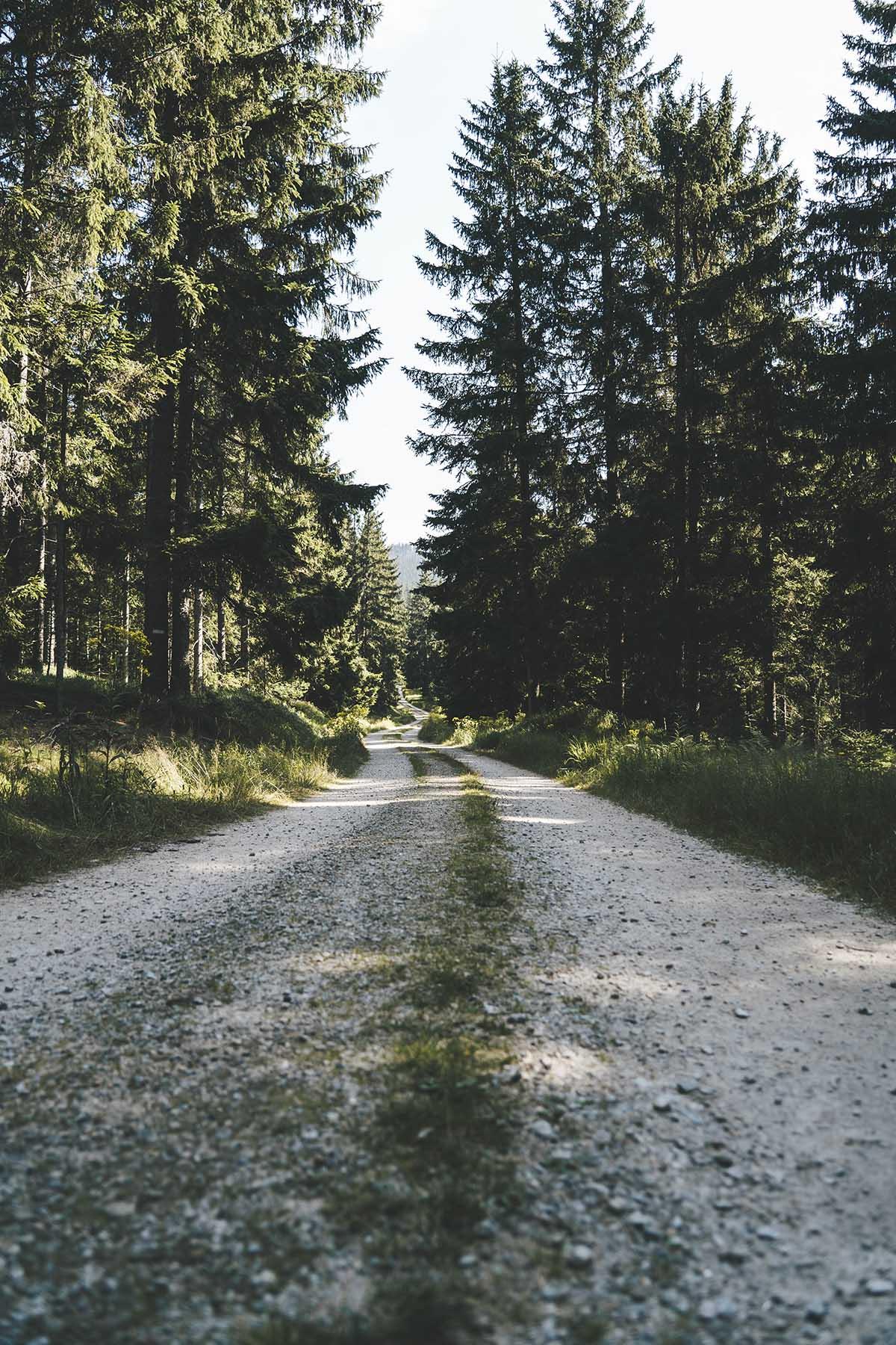 lamer-winkel-naturkino-zwercheck-wanderweg