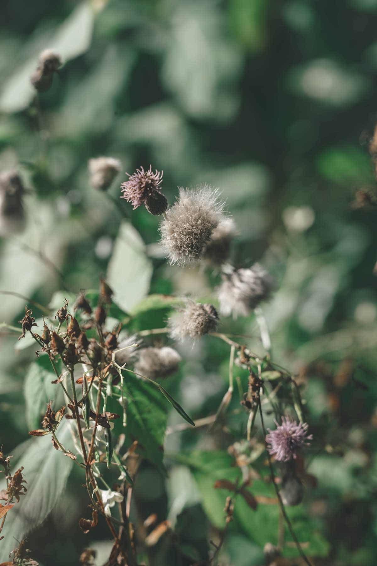 wandern-donausteig-schloegener-schlinge-pflanze-makro