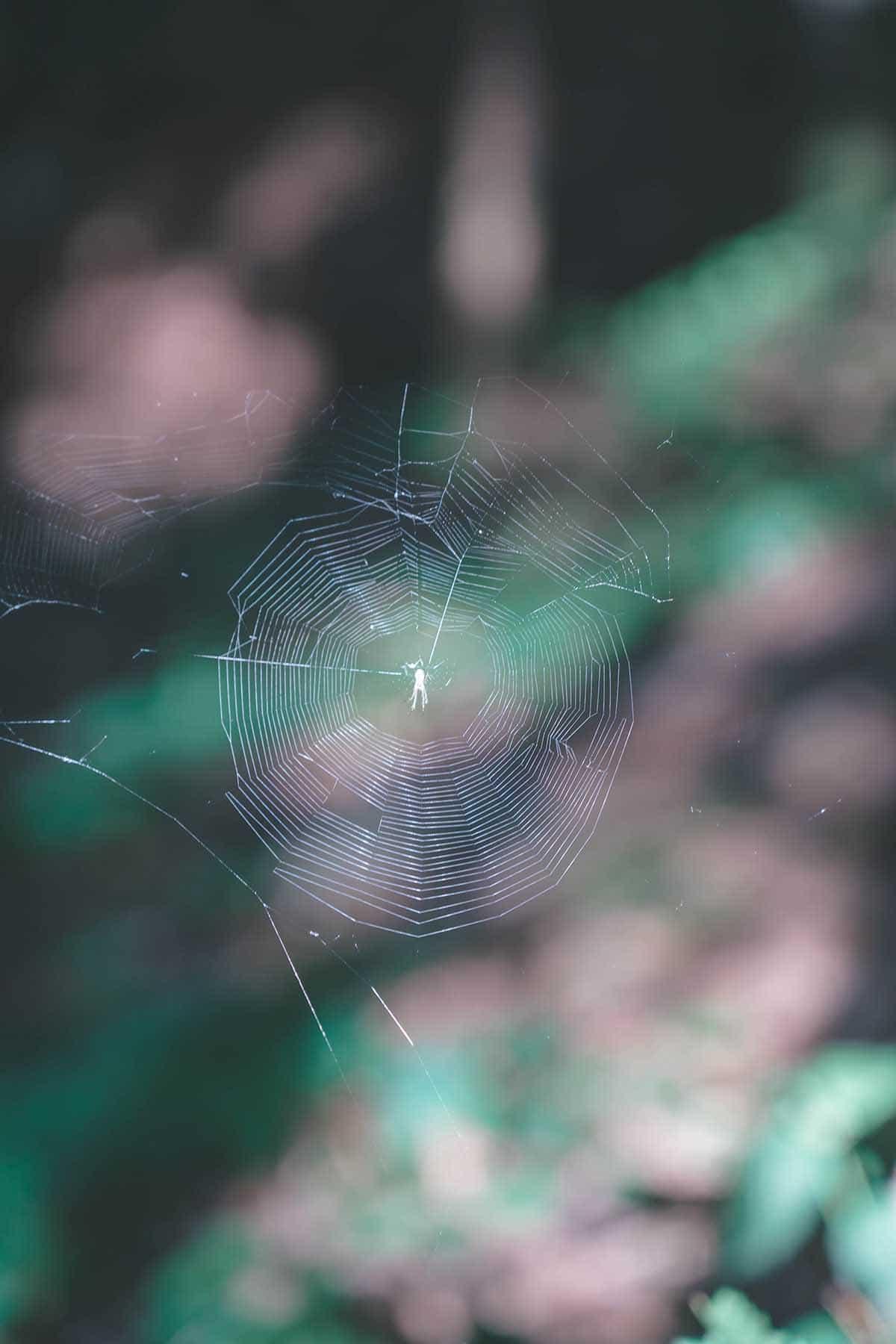 wandern-donausteig-schloegener-schlinge-spinne