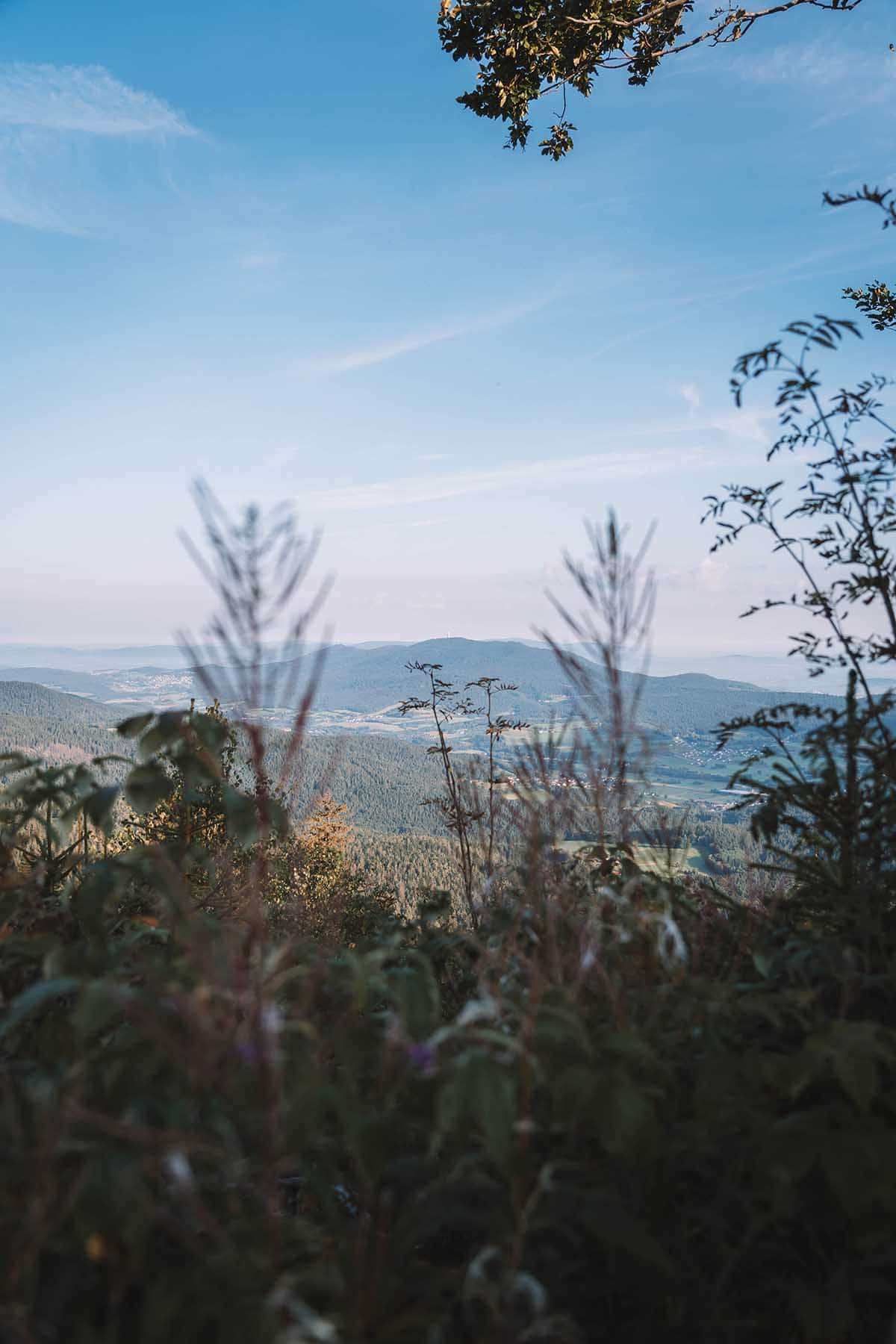 wandern-muehlriegel-oedriegel-skywalk-panorama-bayerwald